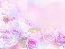 罗斯开花与葡萄酒过滤器作用的软的样式 库存图片