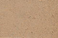 罗斯灰棕色 免版税库存图片
