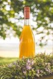 罗斯玛丽橙色糖浆 免版税库存图片