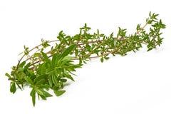 罗斯玛丽,麝香草,在白色背景的新鲜的草本 免版税库存图片