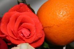 罗斯用桔子 免版税库存图片