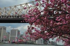 罗斯福岛在纽约 免版税库存照片