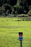 罗斯福没有非法侵入标志的麋母牛牧群  免版税库存图片