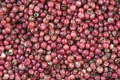 罗斯胡椒,香料在法国和巴西赞赏了 库存照片