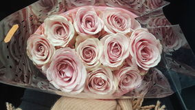 罗斯花桃红色好的颜色 库存图片
