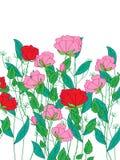 罗斯花植物 免版税库存图片