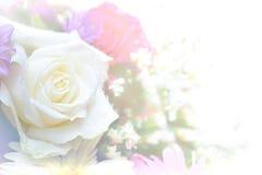 罗斯花高关键抽象和软的颜色 免版税库存图片