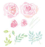 罗斯水彩开花设计的成套工具 库存照片