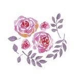 罗斯水彩开花设计的成套工具 库存图片