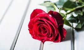 罗斯 红色玫瑰 英国兰开斯特家族族徽花束 在花岗岩背景的几朵玫瑰 情人节,婚礼之日背景 库存图片