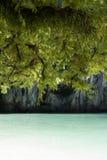 罗望子树和蕨在海滩 免版税库存照片