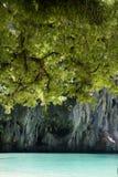 罗望子树和蕨在海滩 图库摄影