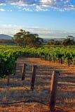 巴罗莎山谷葡萄园在南澳大利亚 免版税库存照片