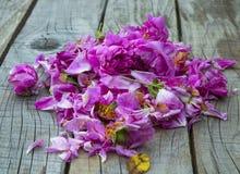 罗莎果酱和秀丽治疗的damascena玫瑰 免版税库存图片