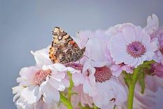 罗莎花在与蝴蝶的夏天 免版税库存照片