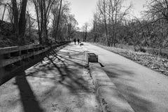 罗阿诺克由威里驱动,罗阿诺克,弗吉尼亚,美国的河林荫道路 库存照片