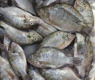 罗非鱼鱼在市场上 免版税库存照片
