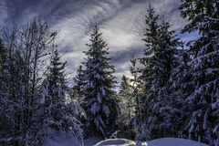 罗马尼亚冬天 免版税库存照片