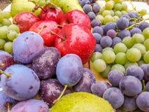 从罗马尼亚的新鲜的可口生物果子 库存图片