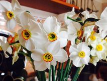 从罗马尼亚的春天花 库存照片