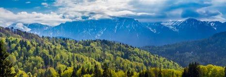 罗马尼亚,普雷代亚尔 多雪的Bucegi山和绿色森林从普雷代亚尔看的他们的基地的 免版税库存照片