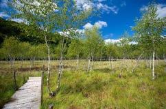 罗马尼亚- Pesteana沼泽(无底的湖) 库存照片