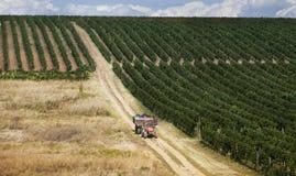 罗马尼亚wineyard小山 免版税图库摄影