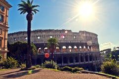 罗马斗兽场罗马棕榈树 库存照片