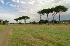 罗马树在背景中环境美化与废墟 图库摄影