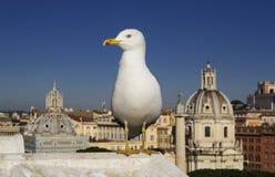 罗马海鸥和纪念碑 库存照片