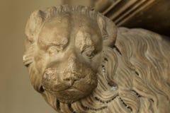 罗马的狮子 免版税库存照片