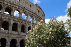 从罗马的Colosseo 库存照片