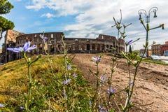 罗马罗马斗兽场的看法 免版税库存图片