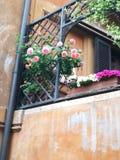 罗马花玫瑰Spagna广场 库存照片