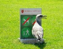 罗马资本和鸟在夏天 库存照片