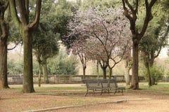 罗马,别墅Borghese公园 图库摄影