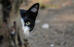 罪恶或猫? ? 免版税库存照片
