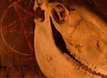 罪恶接近马头骨和五角星形 库存图片