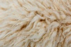 绵羊为纹理背景剥削 免版税库存图片