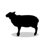绵羊农厂哺乳动物的黑剪影动物 免版税库存照片