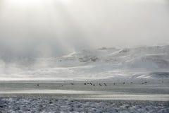 绵羊农场在冬天 库存照片