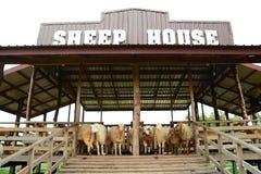绵羊农场 库存图片