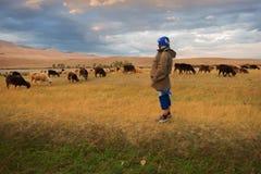绵羊和山羊的妇女牧羊人 图库摄影