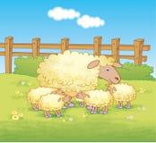 绵羊和羊羔在领域 免版税库存图片