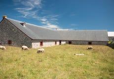 绵羊和老石谷仓 免版税库存图片