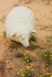 绵羊和花 免版税库存照片