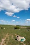 绵羊和马在家在滚动的苏克塞斯乡下 免版税库存照片