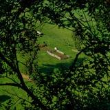 从羊圈的山风景 免版税库存图片