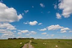 绵羊在家在滚动的苏克塞斯乡下 图库摄影
