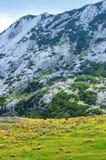 绵羊在山的一个草甸 库存图片